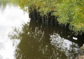 Природа - Архангельской области