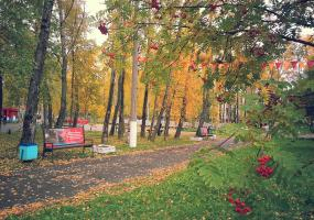 Опавшая листва. Фото пейзажи - осень в Северодвинске.