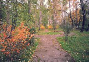 Красно желтые листья. Фото пейзажи - осень в Северодвинске.