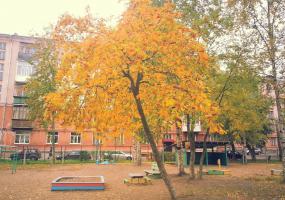 Рябина в детском саду. Фото пейзажи - осень в Северодвинске.
