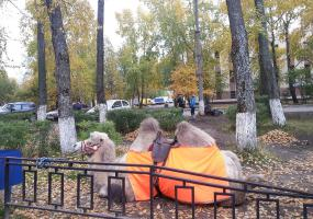 Оранжевый верблюд. Фото пейзажи - осень в Северодвинске.