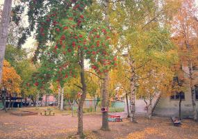 Алая рябина. Фото пейзажи - осень в Северодвинске.
