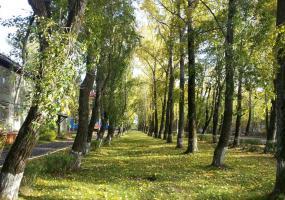Аллея.Тополя. Фото пейзажи - осень в Северодвинске.