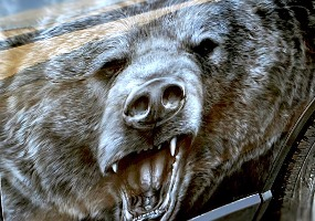 Животные - медведь. Аэрография - фото.