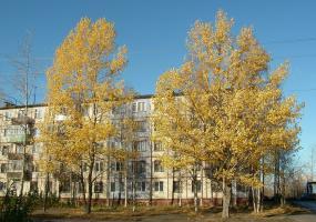 Золотая осень. Фото города Новодвинск.